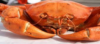 va red crab
